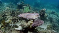 Sequence highlighting the diverse species living on the Great Barrier Reef.