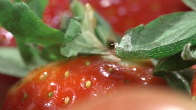 Sequence of extreme close-up pans across a variety of popular fruits.