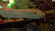 Sequence showing an albino Burmese python slithering across a banquet table laden with food and drink.