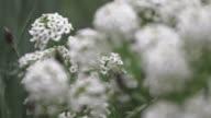 Sequence showing focus pulls between wildflowers, UK.