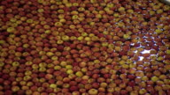 Sequence showing Gala apples moving through a water bath at a processing plant in Kent, UK.