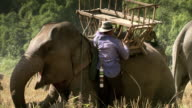 Sequence showing men placing wooden seats onto the back of elephants. Laos.