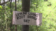 Sequence showing Umkar Living Root Bridge, constructed from the aerial roots of rubber trees, Siej, Meghalaya, India.