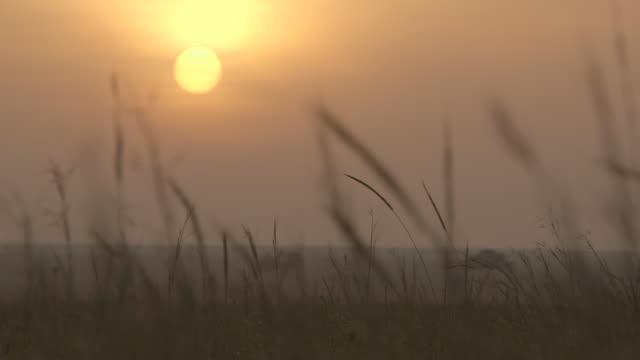 Series of focus pulls between long grass and the rising sun, Tanzania.