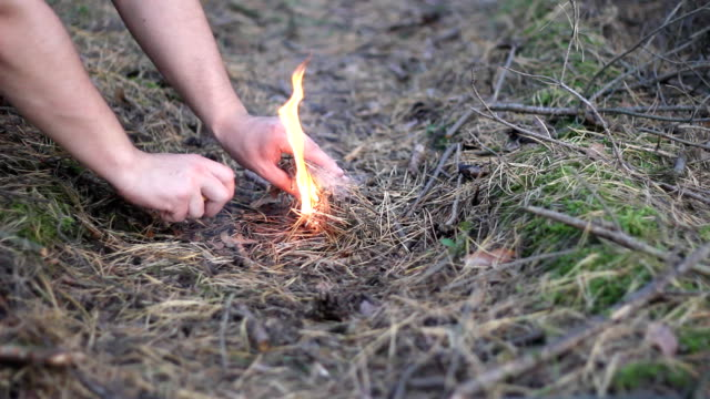 Setting fire in the forest