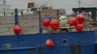 Several red buoys hanging on side of blue fishing boat