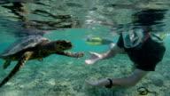 Seychelles- Hawksbill sea turtle (Eretmochelys imbricata) with a diver 1
