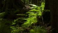 Shadows pass over ferns in forest.
