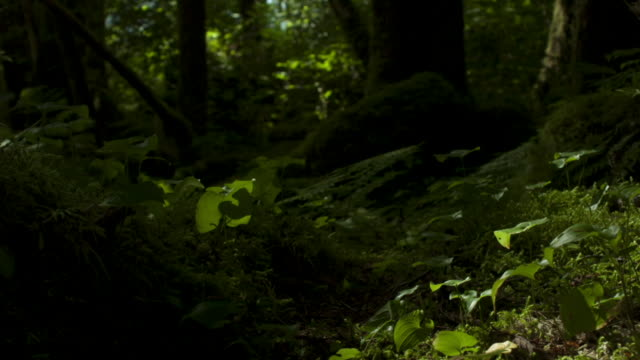 Shadows pass over moss and ferns in forest.