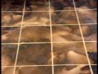 A shaggy little dog walks across a tiled floor and barks.