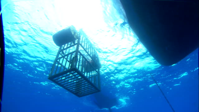 A shark cage bobs in the water at the bow of a boat. Available in HD.