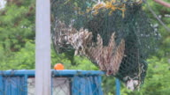 MS Shark finns hanging to dry in fishing net / Brunei, Brunei Darussalam