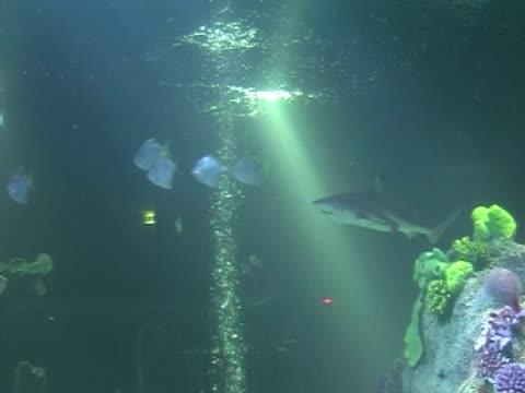 Shark, swimming, fish follow shark, behaviour, protection