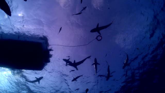 Hai unter dem Boot