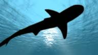sharks unter Wasser