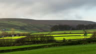 Sheep Grazing in Pastoral Landscape - Time Lapse