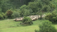 WS AERIAL Sheep herd in Mount Olympus / Olympus, Macedonia, Greece