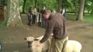Sheep to graze in London Royal Parks in bid to encourage wild meadows ENGLAND London Green Park EXT Tom Davis leading two sheep through Green Park...