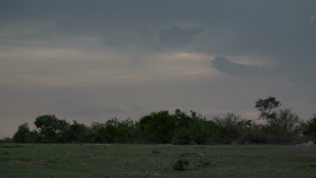 Sheets of lightning flash across the sky as storm approaches, Kruger National Park, South Africa