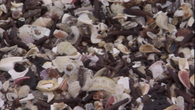 Shells cover a beach on Cape Douglas. Available in HD.