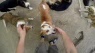 Shelter cane elemosina attenzione