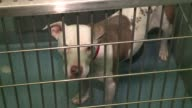 WGN Shelter Dogs in Cages at The AntiCruelty Society in Chicago on Feb 7 2017