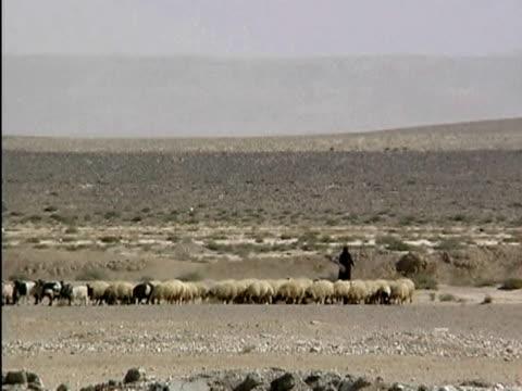 A shepherd herding sheep