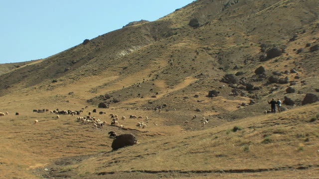 WS Shepherds and sheep in field, Atlas mountains, Morocco