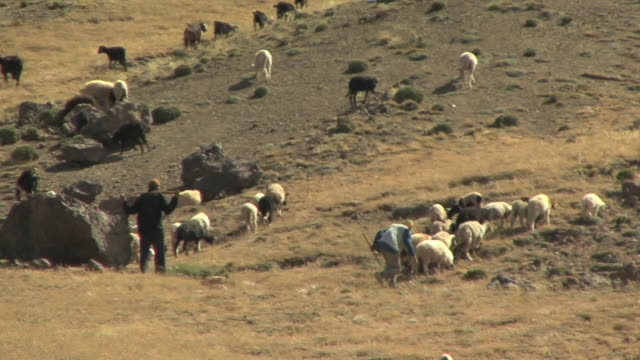 WS PAN Shepherds and sheep in field, Atlas mountains, Morocco