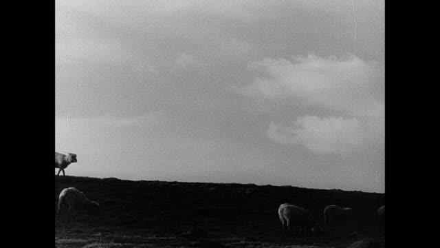 MONTAGE Shepherds in uniform, rifles over shoulders, herding sheep / England, United Kingdom