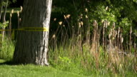 sheriff line around a tree cordoned of murder scene.