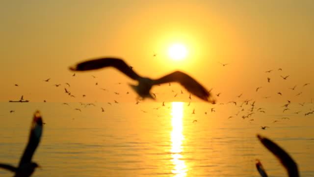shillureate: flock av skuggan av fiskmåsar på sunset