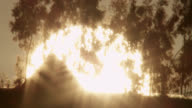 Shimmering sun rises behind trees, Ethiopia