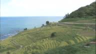 Shiroyone Senmaida / Terraced Paddy Fields