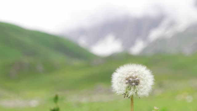 Shit focus from the Himalayas to a dandelion