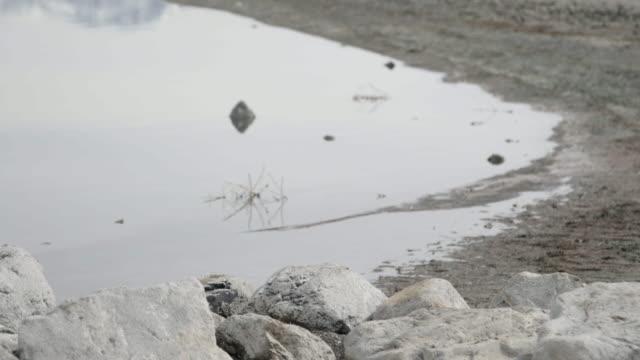 Shore of Great Salt Lake, close up