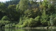 Shoreline forest seen from the Rogue River, Oregon