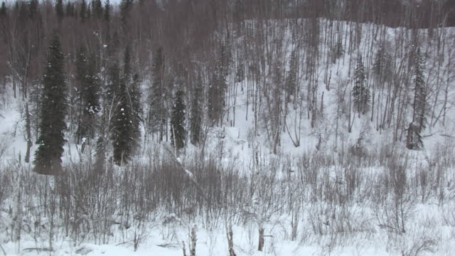MS AERIAL DS ZO Shot around snow covering original Skwentna Roadhouse building on Iditarod trail / Alaska, United States