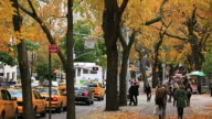 MS TU Shot of 5th Avenue transportation and pedestrians under the autumn color trees and autumnal leaves which blows away by winds / New York, United States