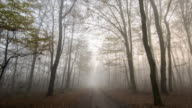 T/L 8K shot of a footpath through foggy forest