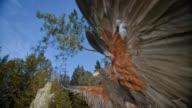 SLO MO shot of a hawk landing on wooden stump