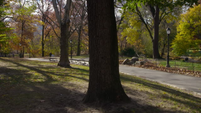 Shot of a woman pushing a stroller along a path in Central Park, New York City on a fall day