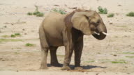 MS Shot of African Elephant cooling down in desert / Etosha National Park, Namibia
