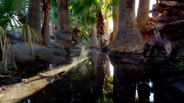 MS T/L Shot of Agua Caliente spring at sunrise with fog on water  / Tucson, Arizona, United States