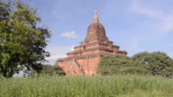 MS LA Shot of Ancient temple in flowering field / Bagan, Mandalay Division, Myanmar