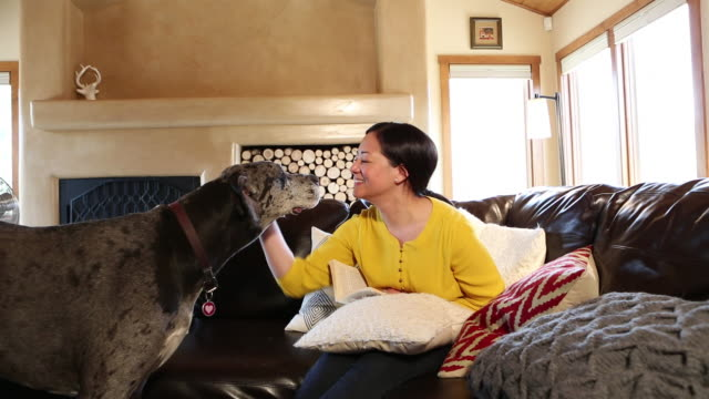 MS Shot of Asian woman playing with her large dog in her living room / Santa Fe, New Mexico, United States