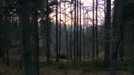MS PAN Shot of autumnal German mix forest at sunset / Dresden, Saxony, Germany