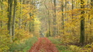 MS Shot of autumnal woodland / Orscholz, Saarland, Germany