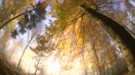 WS DS Shot of autumnal woodland with fog and sun / Freudenburg, Rhineland Palatinate, Germany