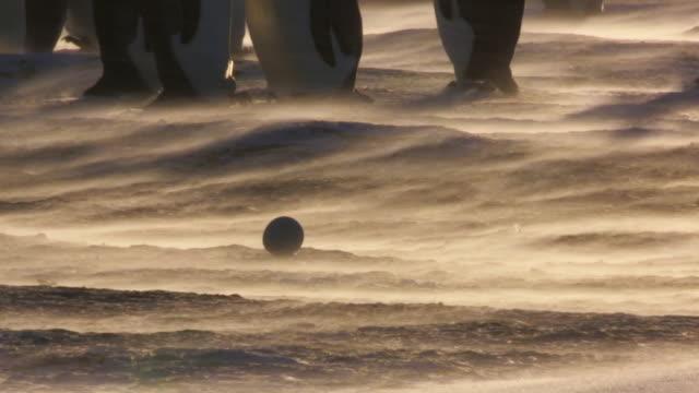 MS Shot of backlit single Emperor penguin egg in sunlight and blizzard with pairs of Emperor penguins / Dumon D Urville Station, Adleie Land, Antarctica